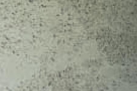 KN 7242